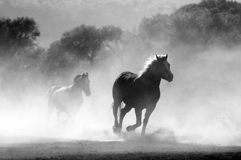 https://pixabay.com/en/horse-herd-dust-nature-wild-430441/
